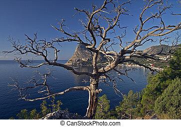 A dead pine tree.