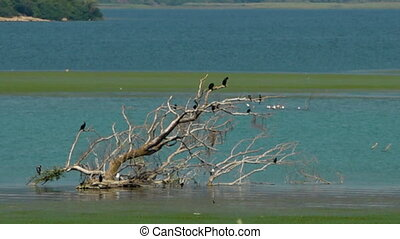 A dead tree with bird in blue-green water