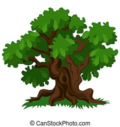 A deciduous oak tree with green leaves and fresh grass...