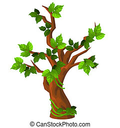 A deciduous tree with green leaves isolated on white...