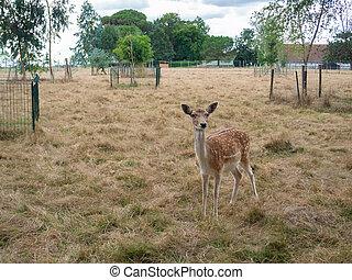 a deer in captivity