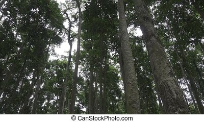 A dense pine forest. The view from the bottom up.