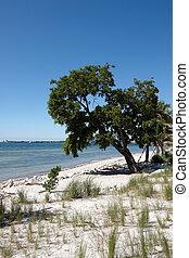 A deserted beach in Florida