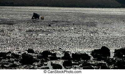 A dig clams fishermen on beach, ebb.