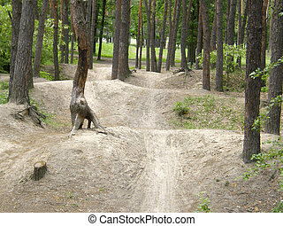 bike path in the forest