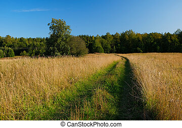 A dirt country road in the field of yellow autumn grass under a blue sky