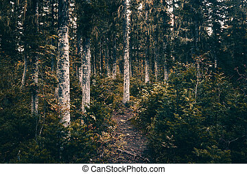 A dirt path in the coniferous forest. Hiking, traveling.