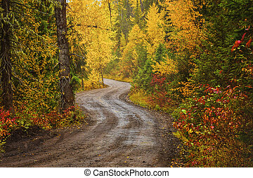A dirt road in a forest in fall
