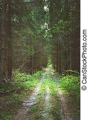 A dirt road through a dark coniferous forest