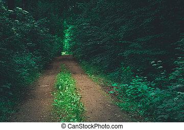 A dirt road through a dark forest