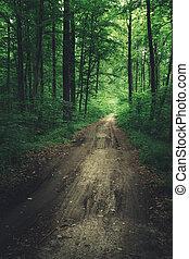 A dirt road through a green dark forest