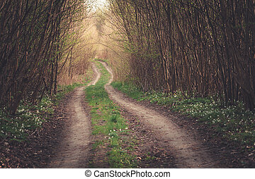 A dirt road through a thick and dark forest