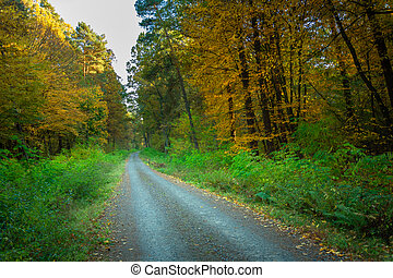 A dirt road through the forest with yellow trees