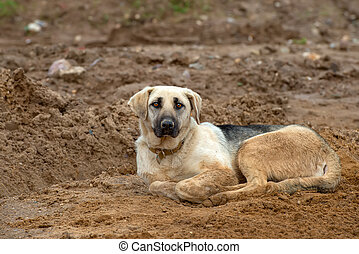 A dirty dog in a collar lies on the sand