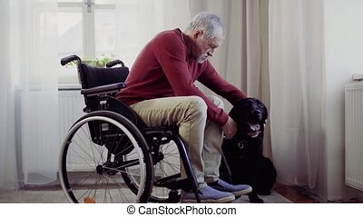 A disabled senior man in wheelchair indoors playing with a pet dog at home, stroking it.