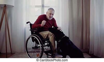 A disabled senior man in wheelchair indoors playing with a...