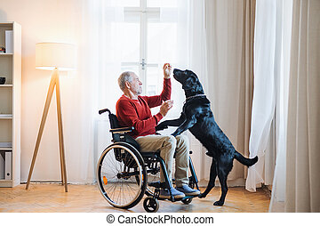 A disabled senior man in wheelchair indoors playing with a pet dog at home.