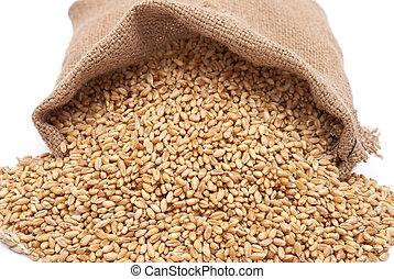 a, disperso, saco, com, trigo, de, um, grão