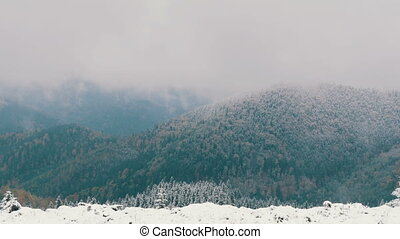 A distance view of the white, wild snow-covered treetops. Carpathian mountains in October, the first snow in the highlands