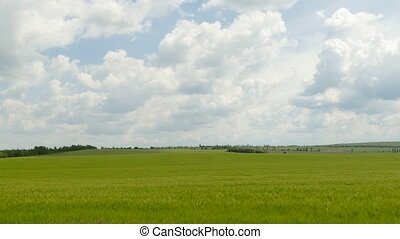 a distant wheat field ending near the horizon line against...