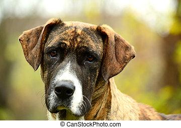 A docile dog