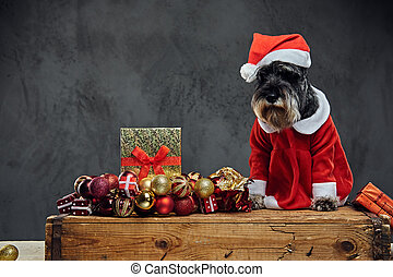 A dog dressed in Christmas dress on a wooden box with Xmas garla