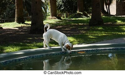 A dog drinks water from a fountain. Fountain in the city park