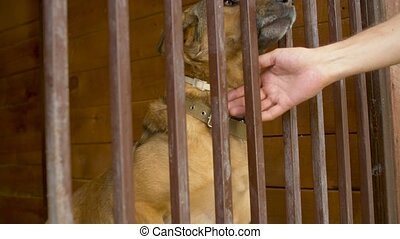 A dog in an aviary scratches the fence