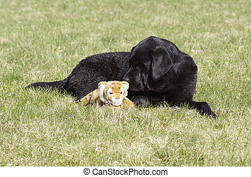 A dog in the grass with a soft toy.