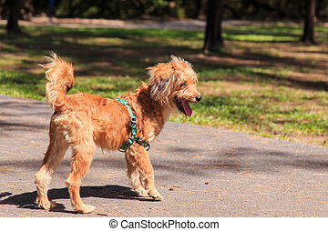 A dog in the park