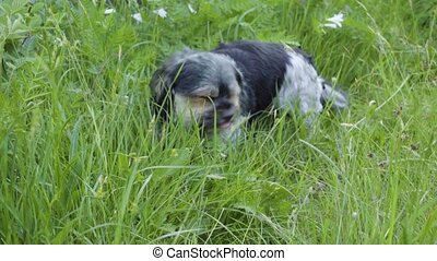 A dog is eating grass. - A dog is eating grass