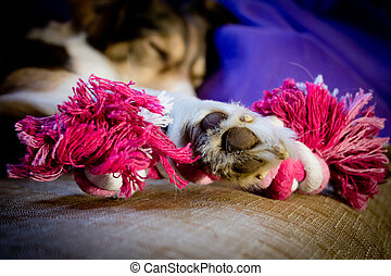 A Dog is holding a toy with a paw