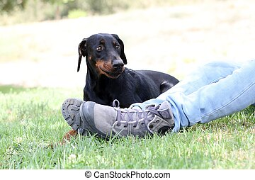 A dog lay on the grass next to her owner in the park