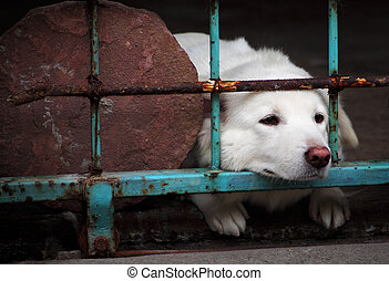 a dog looking through the bars of a fence