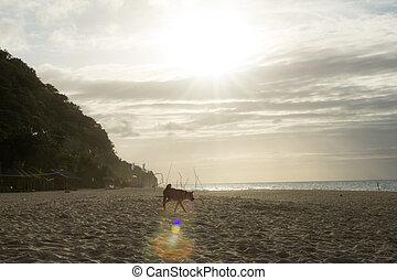 A dog on an empty beach over the evening sunset