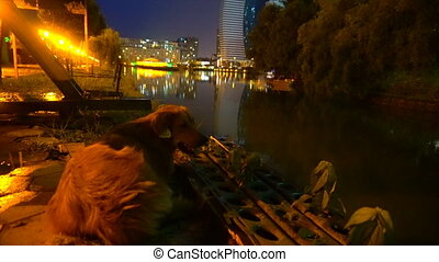 a dog on the river's night bank, against the background of...