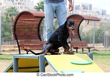 A dog plays in the facilities in the dog park
