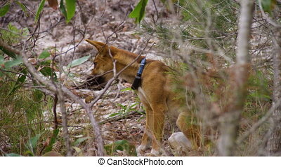 A dog running in the middle of the woods - A wide shot of a...