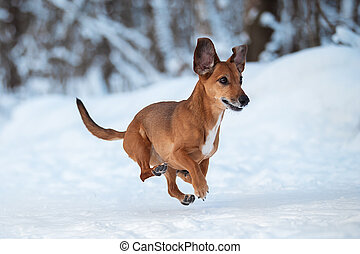 A dog running in the snow.