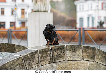 A dog sits on a bridge in the city