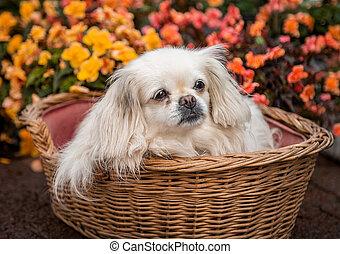 A dog sitting in a basket