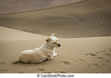 A dog sitting on the desert