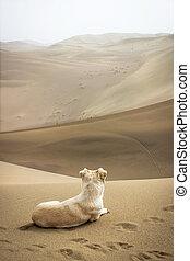A dog sitting on the desert
