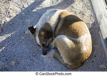 dog sleeping in the shadow,