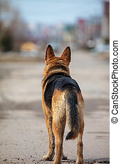 A dog stands on the road with his back
