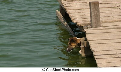 A dog swimming underneath a jetty - A close up shot of a dog...