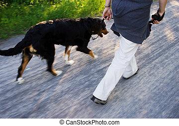A dog walk