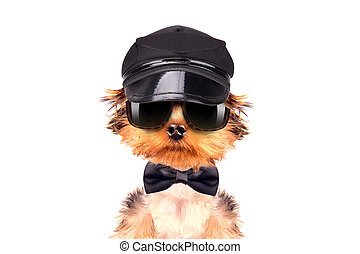 A dog wearing a cap and glasses with neck bow