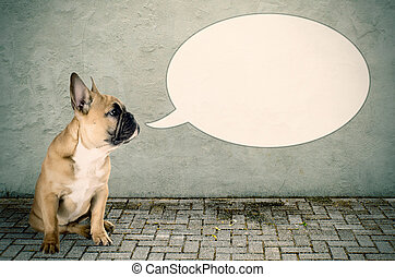 a dog would like to say something - a French bulldog with a ...