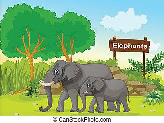 a, dois, cinzento, elefantes, perto, um, madeira, signage